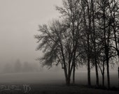 Landscape Photography Oregon Trees Foggy Morning Black and White