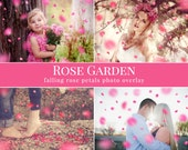 """Petal photo overlays """"Rose Garden"""", falling pink rose petals photo overlay, Valentine's Day atmosphere, photo overlays for Photoshop"""