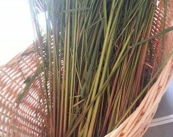 Lemon Grass - East Indian -  Cymbopogon flexuosus -- Medicinal Herb
