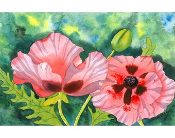 Limited Edition Signed Print, Peach Pink Poppies in Botanical Style Watercolour