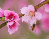 Nature Photography, honey bee art, girl nursery wall decor, pink flower blossoms, nature lover gift