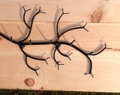 Branch Shaped Rack ideal for keys or jewelry. Branch is wall mounted