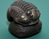 Flexicamene trilobite fridge magnet