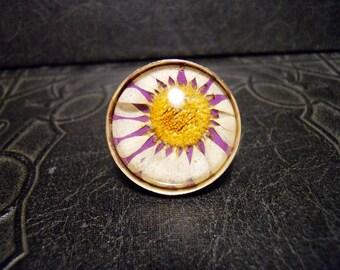 Real Preserved Daisy Specimen Ring
