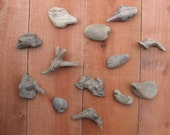 Driftwood - Chunky Little Knobs - 13 Pieces