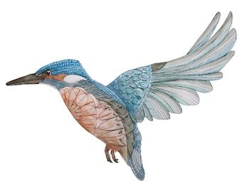 Bird Art. Kingfisher Fine Art Print. Limited Edition. Watercolour Print. Kingfisher Art. Bird Wall Art.
