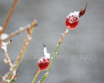 Winter Berry Wall Art. Nature Photography Print. Macro Photography. Rose Hips Photo Print, Framed Photography, or Canvas Print. Home Decor.
