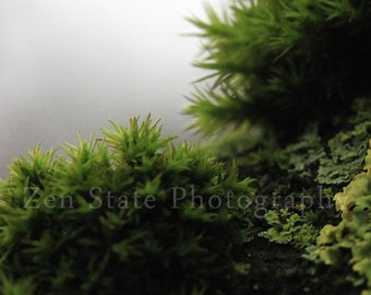 Rainforest Photography Print. Nature Wall Decor. Macro Photography. Tree Moss Photo Print, Framed Print, or Canvas Print. Home Decor.