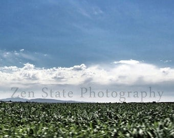 Corn Field Print Color Photography. Custom Fine Art Photography for the Home. Blue and Green Landscape Photograph. Nature Photography.