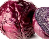 100 - Heirloom Cabbage Seed - Red Acre - Heirloom Vegetable Seed, Red Acre Cabbage Seed, Heirloom Cabbage, Red Cabbage, Non-gmo Cabbage Seed