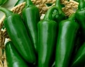 50 - Heirloom Hot Pepper Seeds - Tam Jalapeno - Heirloom Pepper Seed, Tam Jalapeno Pepper Seed, Heirloom Jalapeno Seed, Non-gmo Pepper Seeds