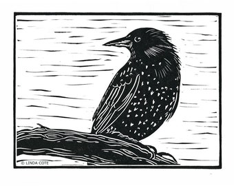 Little Starling, Linocut Relief Print, Hand Pulled Fine Art, Limited Edition, Printmaking Original, Bird