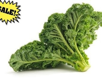 Organic Kale Seeds *Premier* ~w/Beneficial Bacteria/Bulk Available~