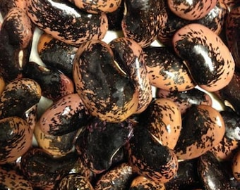 Mark Beans Seeds, Purple with mottled black but can often be lavender. Very rare !