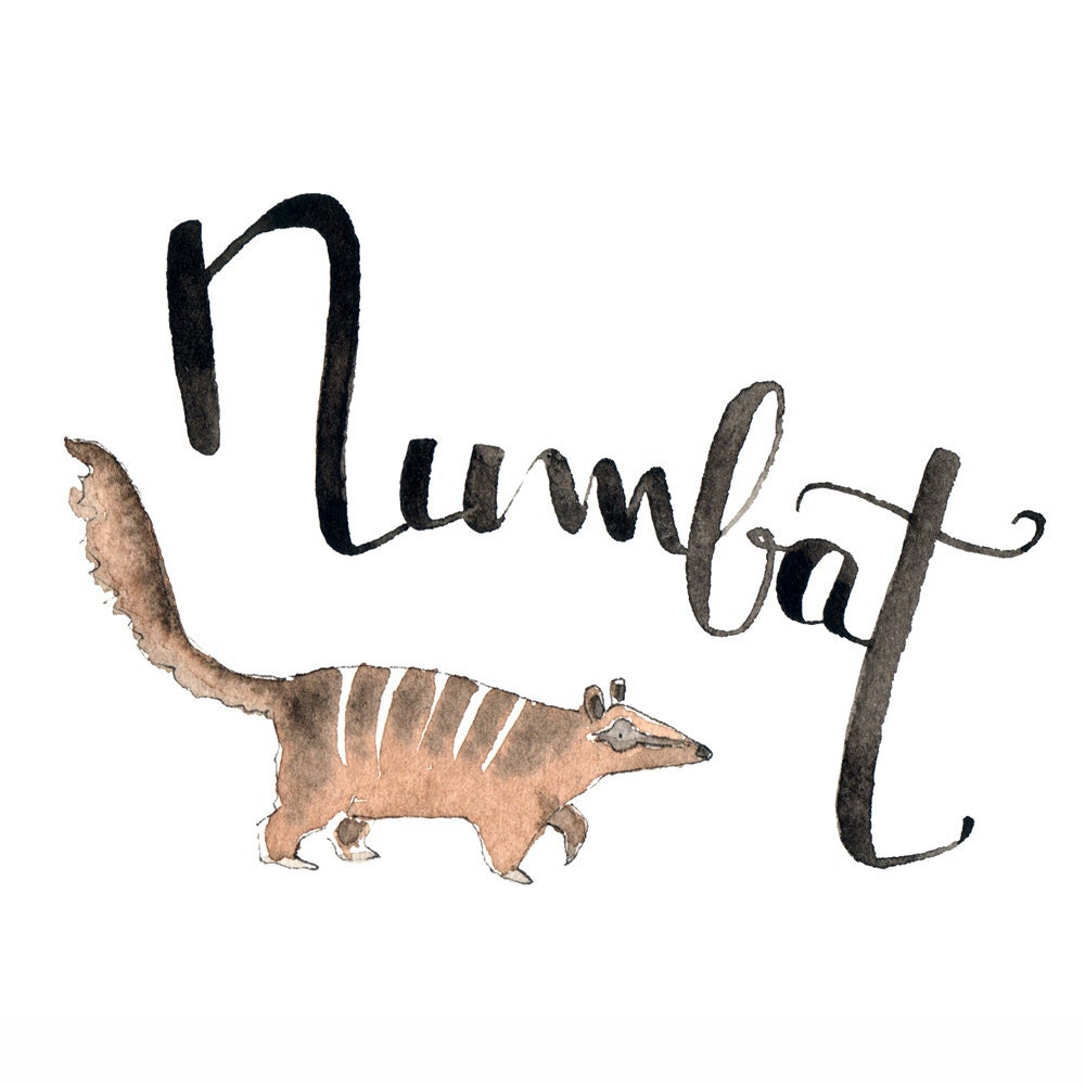 animals that start with n n like numbat learn with what animal name 11230