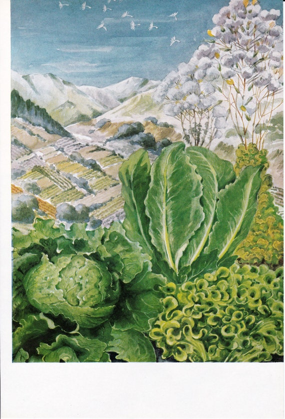 Lettuce - Vegetable Print - Vintage Book Illustration - Else Bostelmann - Gardening Print - Botanical Print