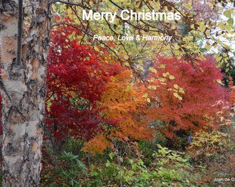 Digital File Landscape Holiday Card 2014