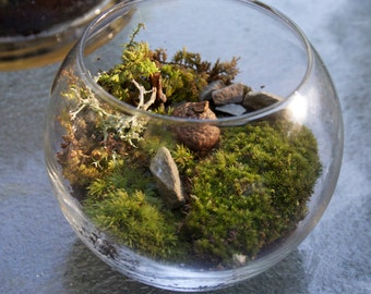 Mini- Magical, forests Terrariums