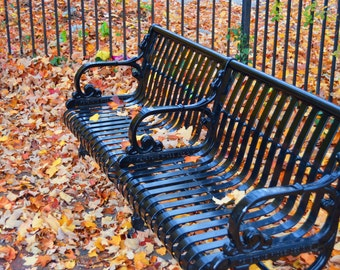 Park Bench in the Fall fine Art Print