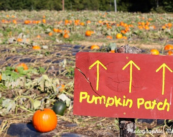 pumpkin patch case analysis 98 reviews of oma's pumpkin patch this place is so fun of come here two years in a row and the family loved it it's a great place to come for at least a few hours so the kids can play.