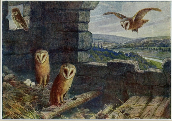Barn Owl Fine Art Original Etching by