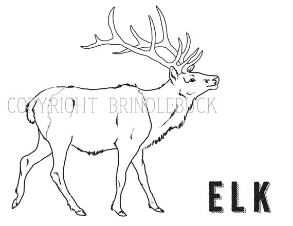 Elk coloring page home sketch coloring page for Elk coloring pages