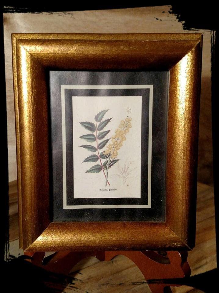 Collectible wall art framed flower berberis thunbergii for Kitchen framed wall art