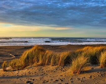 Dunes of Humboldt Bay, Beach Grass, Sunset, Pacific Coast, Northern California