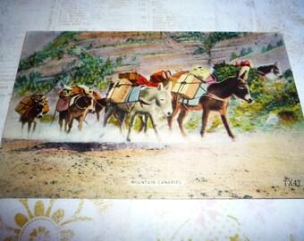 "Unused NM Vintage 1940s Linen Postcard- "" Mountain Canaries"""