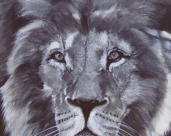 His Majesty - Lion - Limited Edition Mounted A3 print of beautiful lion's head