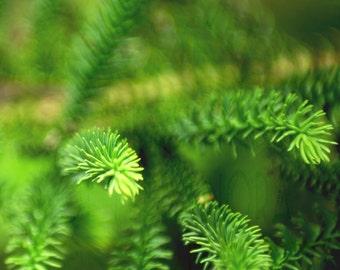 Pine Needles Photo Print/Card