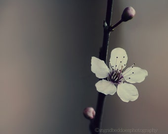 spring blossom photography - floral photography - nature wall art - whimsical fine art photography - flower photo - home decor - wall decor