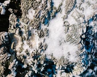 Snowy Pile, Beach, Color, Fine Art, Print, Photography, Close Up, Macro