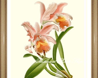 """Orchid Print #8. Botanical Print. Floral Wall Art. Easter Orchid. 5x7"""", 8x10"""", 11x14"""", 13x19"""""""