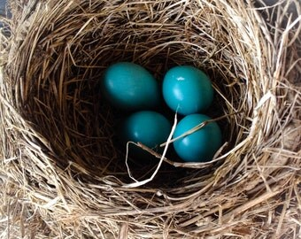 Robin Nest Photo, Bird Nest, Nursery Decor, Nature Photography, Cottage Decor, Robin Egg, Nest, 5x5