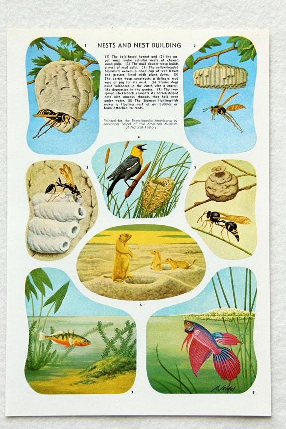 poisson abeille vintage oiseau niche illustration couleur. Black Bedroom Furniture Sets. Home Design Ideas