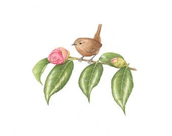 Winter Wren on Camellia