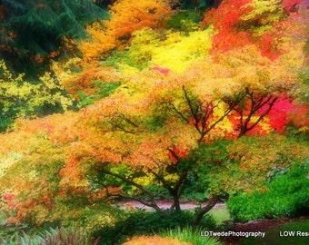 Nature Photograph, Tree Photograph, Fall Season, Fall Colors, Autumn Landscape, Red Orange Yellow, Arboretum, Colorful Tree, Fine Art Print