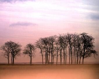Landscape Photography, Bare Trees at Dusk, Sunrise, Sunset, Dawn, Autumn, Fall, Orange, Peach, Pink, Fine Art Photography, Tree Wall Decor