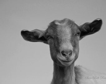 Photo of Awesome Goat - Black and White Photo