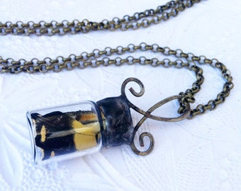 Swallowtail Butterfly Wing Necklace, Soldered Butterfly Vial Charm, Butterfly Pendant, Genuine Swallowtail Butterfly Necklace, Wing Necklace