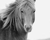 Wild Horse, 8x10 Black & White Wildlife Photography, Animal Photography, Nature Photograph, Chincoteague Pony, Assateague Island, Equine Art