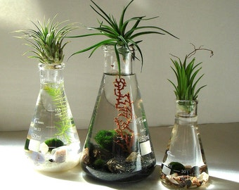 Science Set Marimo Balls Air Plants in Beaker Flasks Zen Pet Mini Aquarium / Terrarium