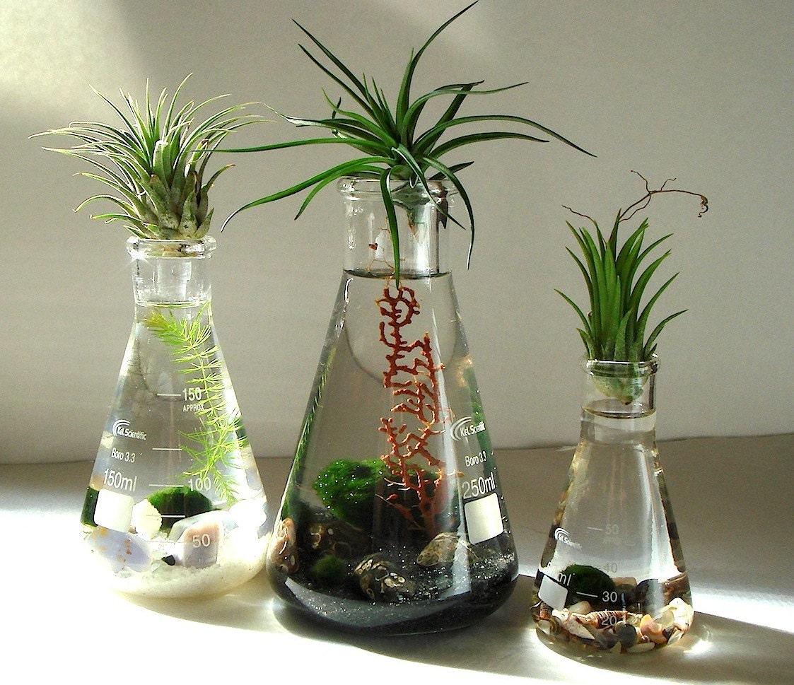 Air Plant Terrarium S: Science Set Marimo Balls Air Plants In Beaker Flasks Zen Pet