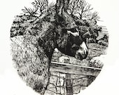 Donkey Print - Original Hand Carved and Printed Engraving - Donkey Art