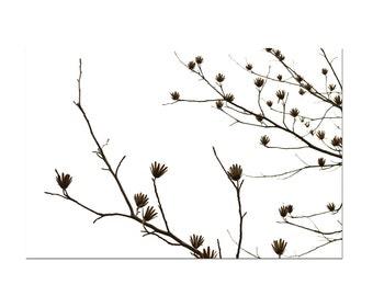 Tree Artwork Tulip Poplar Botanical Art Print Nature Home Decor