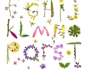 Herbarium Alphabet Flower Botanical Wall Art Poster - Pressed Flower Illustration - Nursery Pastel Art Print - Kids Room Decor - 12x 16