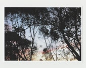 Tree Silhouette Contemporary Art Photography Abstract Nature Pattern Photo Eucalyptus Branches 5x7 Open Edition Giclee Print Artwork 159.1.5