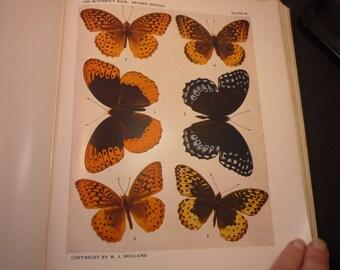 Butterflies - 6 Gorgeous Argynnis specimens - 1945 color plate - vibrant colors - Natural world framable