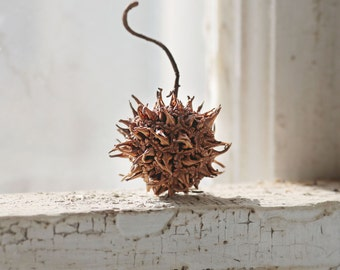 Sweet Gum Tree seed pods- Set of 12 | Organic Wedding Decor, Earthy Wedding, Rustic Home Decor, Earth Tones, Wedding Place Settings
